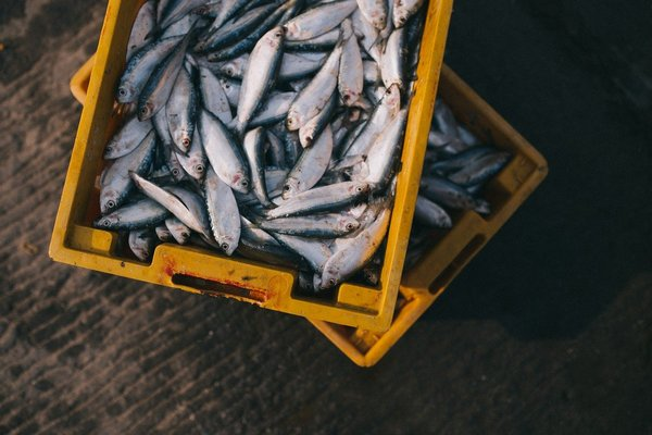 Test di confezionamento ATP prodotti ittici