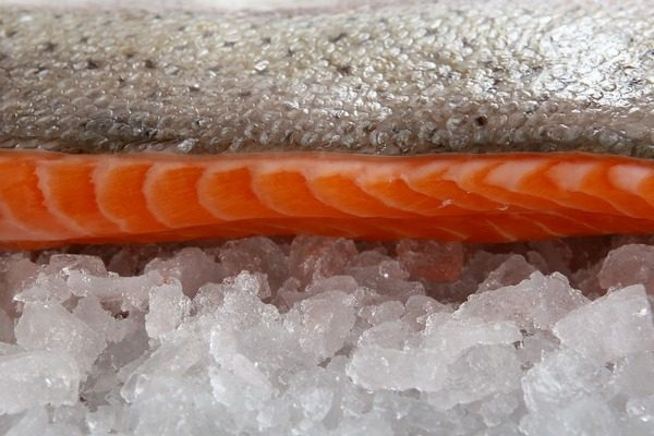 conservazione prodotti ittici
