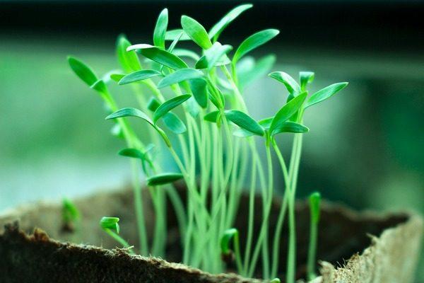 food packaging sostenibile